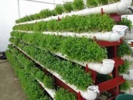 Aprenda Fazer Projeto Horta Hidroponia Orgânica Ecológico